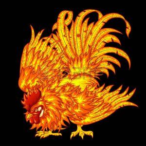 55258180-la-lutte-contre-le-coq-de-feu-sur-un-fond-noir-un-symbole-de-2017-horoscope-est